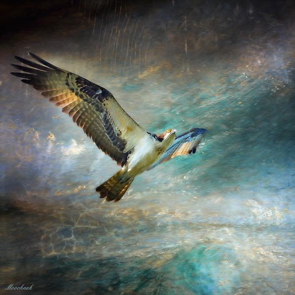alienosprey.jpg