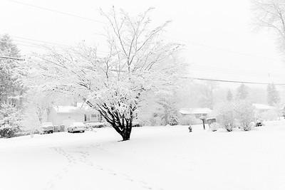 Snow Storm_Feb, 5, 2016_Variations