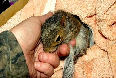 My Squirrels Ennie, Mennie,Minnie