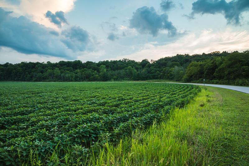 soybean-patch-parklands.jpg
