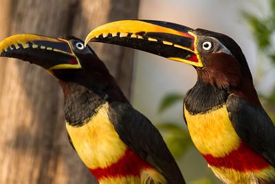 Brazil -Araras Lodge Northern Pantanal