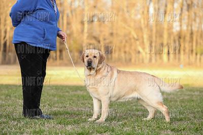 iSpy Labradors   McCrea