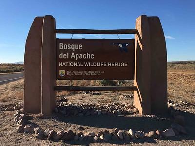Bosque del Apache NM 2017