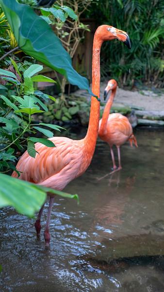 Florida-Keys-Key-West-Butterfly-Conservatory-04.jpg