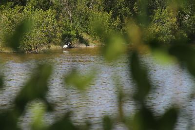 Everglades FVS