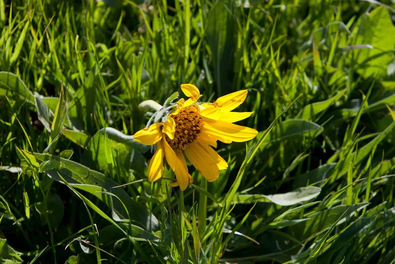 Various Flowers-0786.jpg