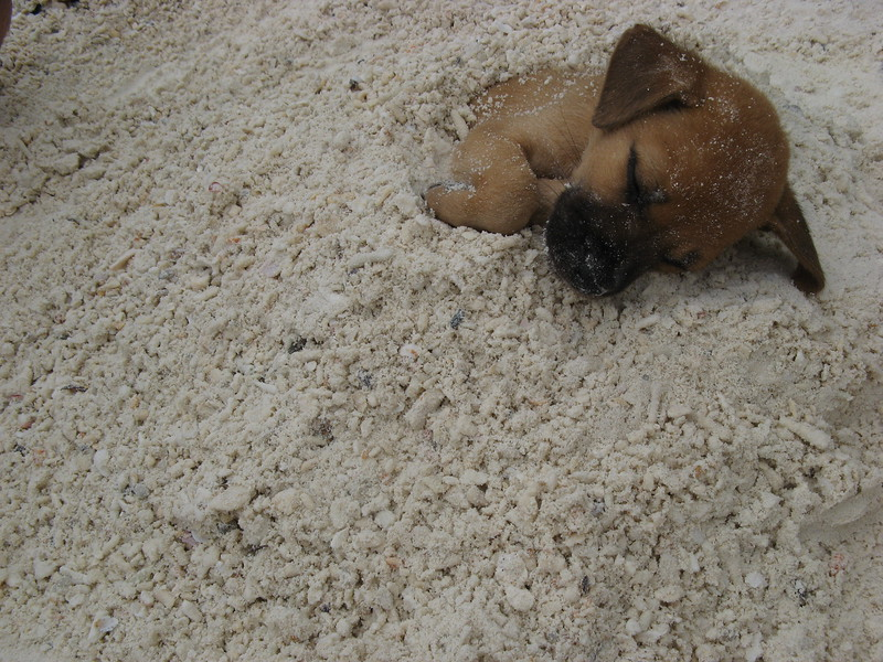 One of the puppies at 'Time to Chill' bar sleeping after Nathan buried him.