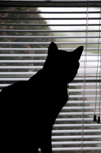 """Greebo watching """"Kitty TV"""""""