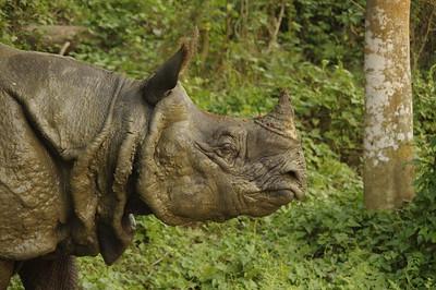 Nepal 2021