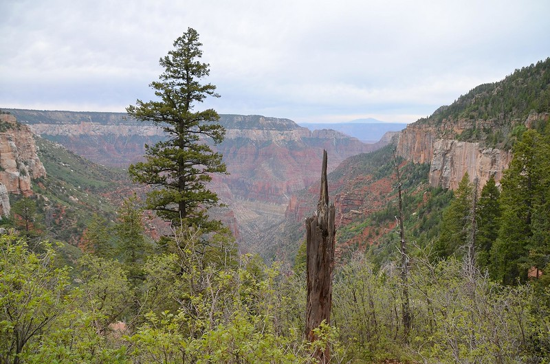grand_canyon2_2014_002.jpg