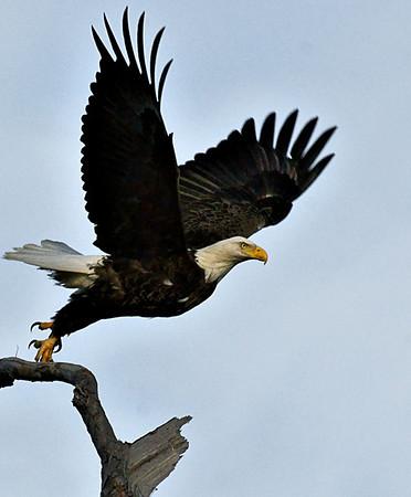 Baytown Eagles 0n 012510