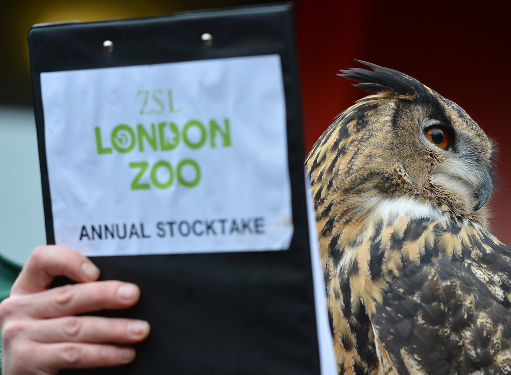 Description of . A zoo keeper poses with a European Eagle Owl during the annual stocktake at ZSL London Zoo in central London on January 3, 2013. ZSL London Zoo embarked on January 3 on their annual complete head-count of every animal at the zoo, which houses over 17,000 animals. BEN STANSALL/AFP/Getty Images