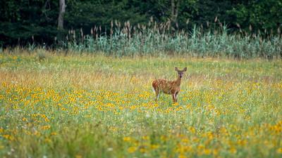 Wetland Restoration - Deer - Summer 2012