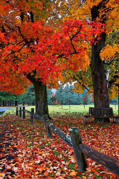 Foliage LD.jpg