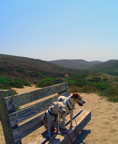 Kehoe Beach Trail, Point Reyes National Seashore, one of the very few trails dogs are allowed on.