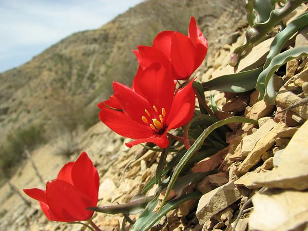 Kopet-Dag Mountains, NE Iran, Spring 2009