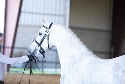 Horse 471