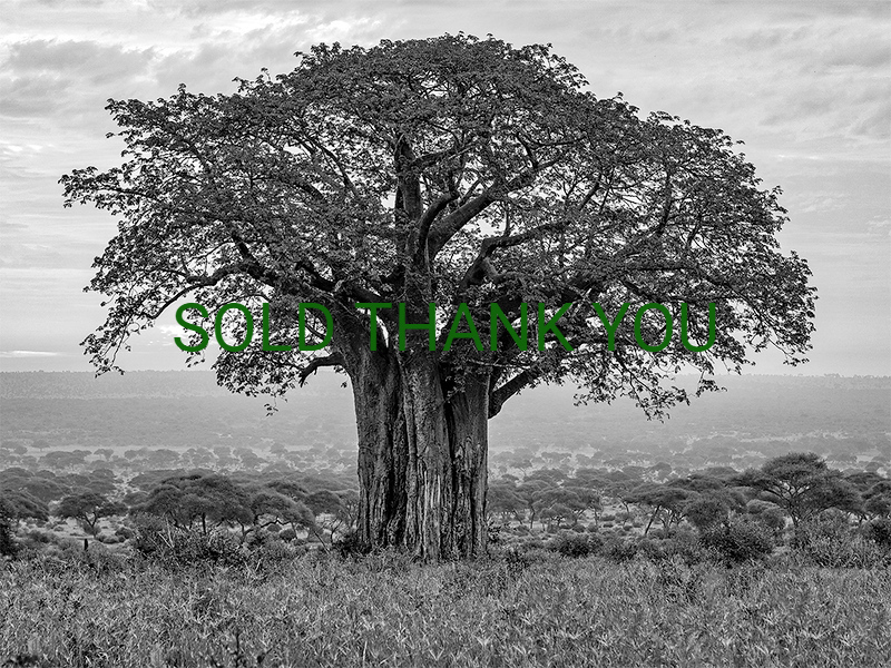 African Baobab/Serengeti Shade Limited Edition - Canvas - $275