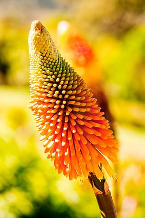Cape Town Botanical Gardens