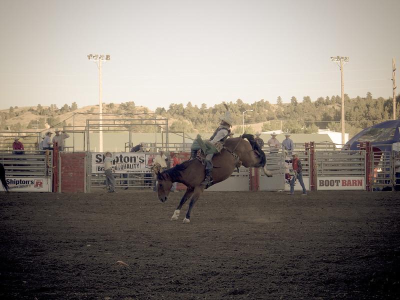 rodeo horse bucking 5.jpg