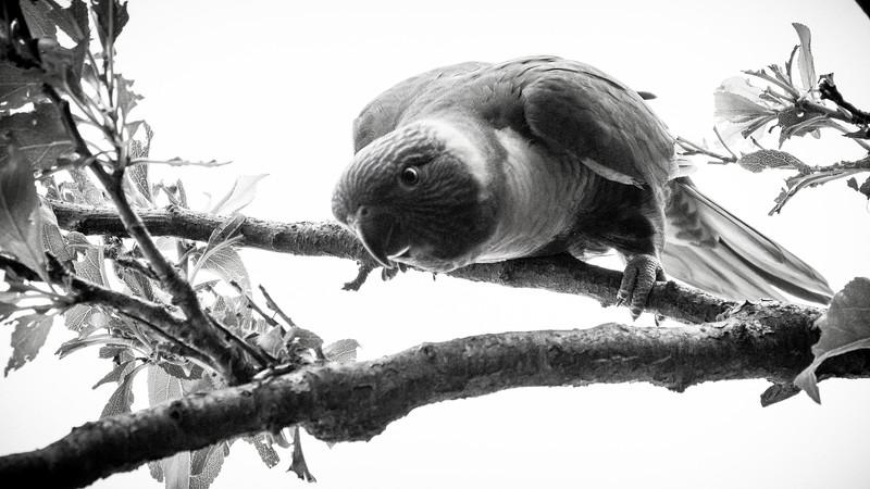 121818  birds  _6.JPG