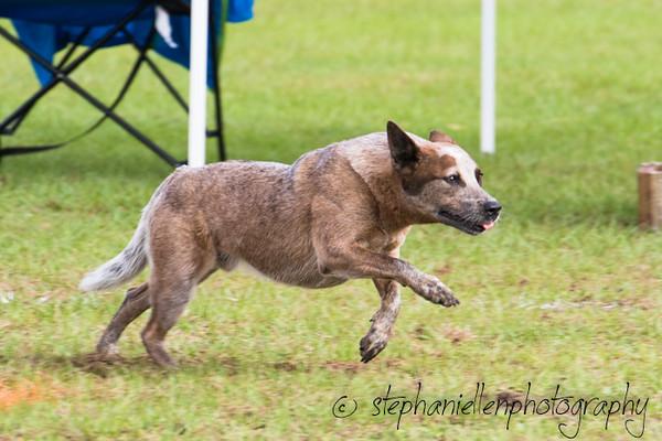 _MG_2395Up_dog_International_2016_StephaniellenPhotography.jpg