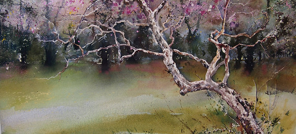 Gabrielle Moulding - Twisted Tree and Blossom, Yoyogi Park, Tokyo