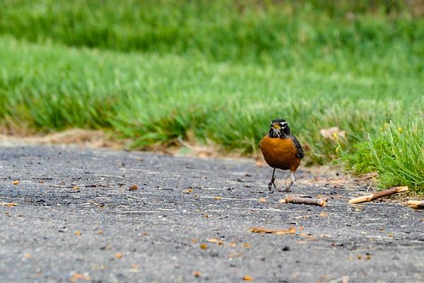 2015 Bird Watching @ Carnegie Lake, Princeton, NJ