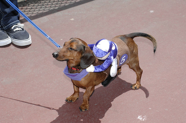 Wiener Nationals 5/26/2012