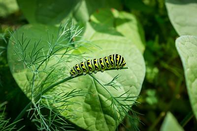 Caterpillar - Sept_07_2020