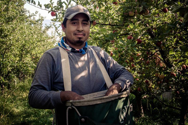 apple picker.jpg