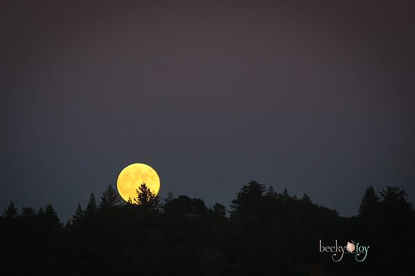 Harvest Moon-9/8/14