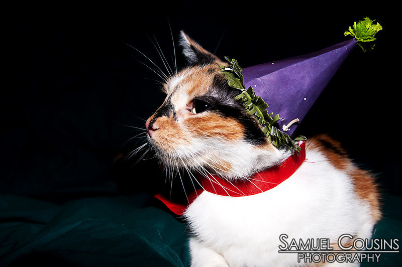 Our cat, Penny, wearing a party hat and a cape. She wasn't a fan.
