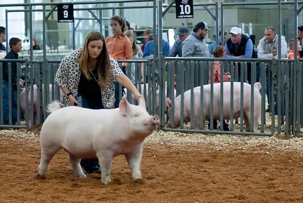 2019 American Royal Swine