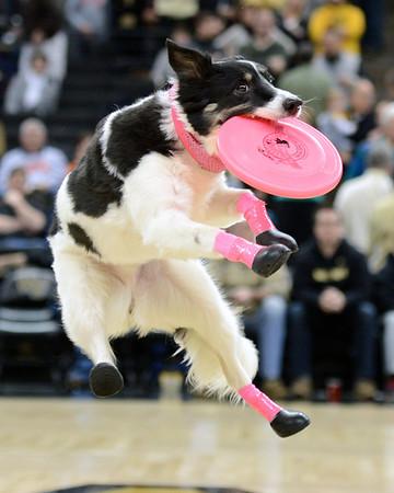 Frisbee Dogs 2014