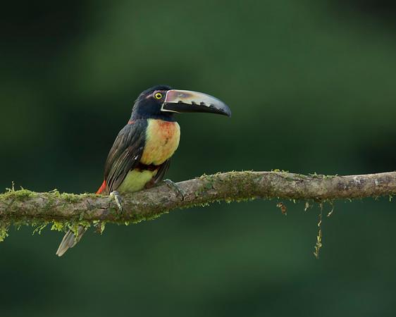 Avian Encounters