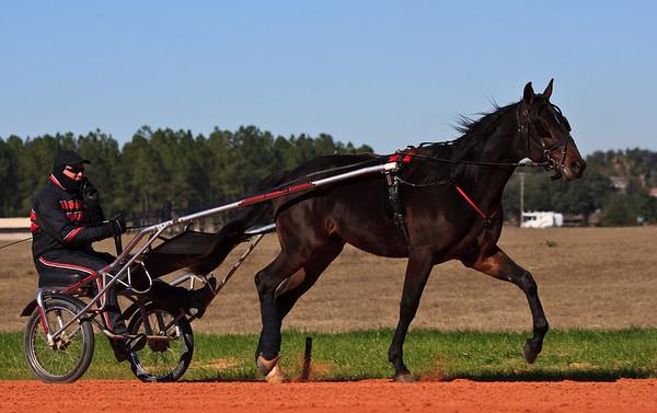 2010 STANDARDBRED HORSES IN TRAINING