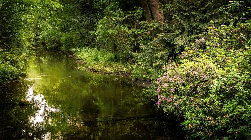 Forest Shadows-032.jpg