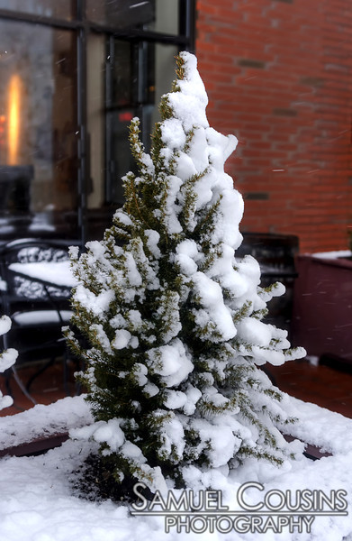 Snow covered pine next to One City Center