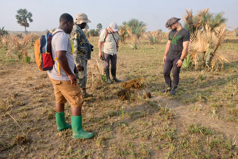 Inspecting Elephant Dung