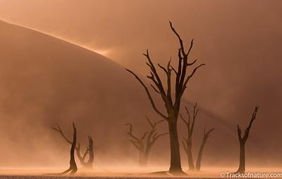 Deadvlei sand storm, Namib-Naukluft National Park