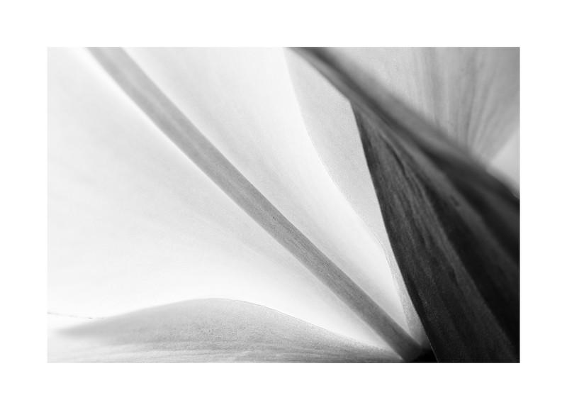 Flores006.jpg