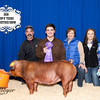 Breed Champion Duroc