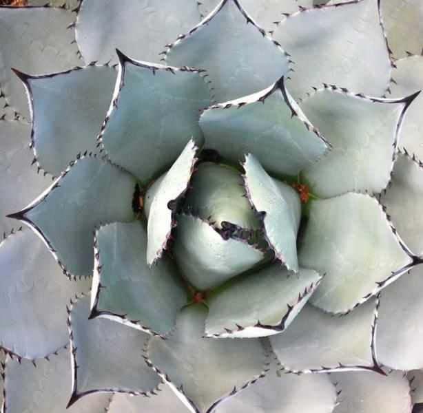Beautifl Succulent.png