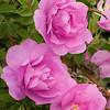 Botanical Garden Fairbanks Alaska