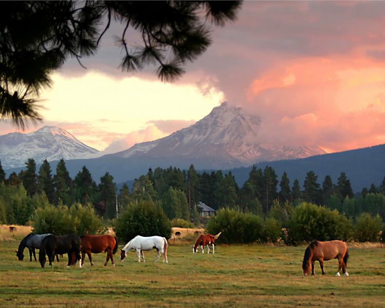 horses sunset 8x10 092106 MASTER 080306_8313NR.jpg