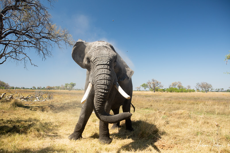 Wildlife in Botswana