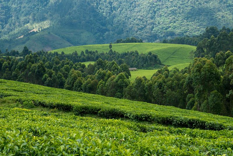 Nyugwe-Rwanda-55.jpg