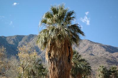 Palm Springs, CA 2009