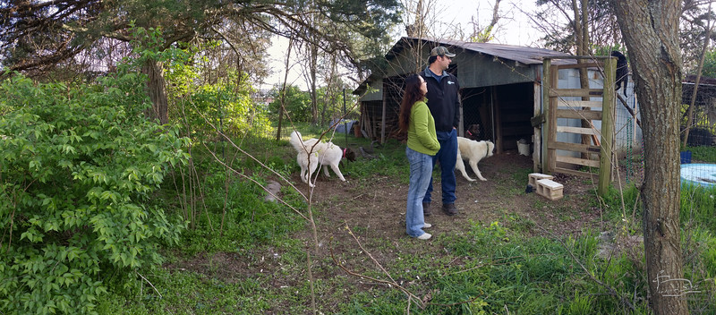 only one white dog; moved during pano takes